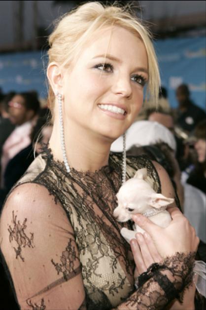 Las celebridades y sus mascotas - BRITNEY SPEARS. ¡Mira a los Jonas, Katy Perry, Britney Spears y más con sus animalitos! ¿Nos cuentas cuál te parece más tierno?