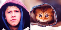 Gatos que se parecen a One Direction